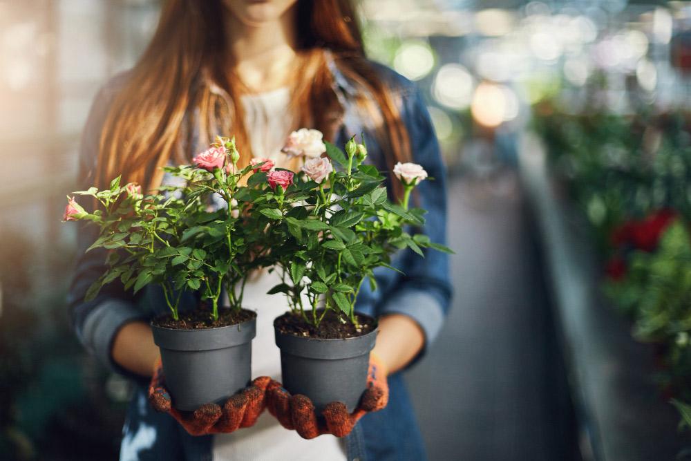 Que planter en juin : les plantes parfaites